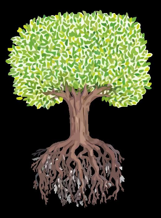 KBK-Baum-Home